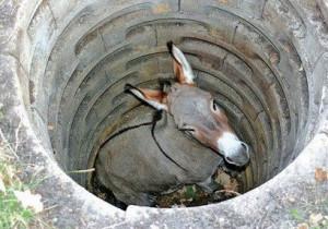 Burro no poço